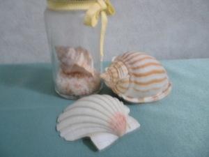 子供の頃に砂浜で拾った貝殻
